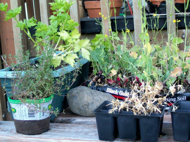 some of the pot herbs