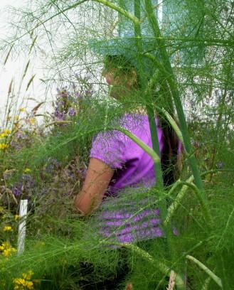 Munchkin harvesting hebe behind it